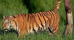 Bandhavgarh Wild Life National Park Tour